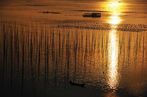 china morning light sea sun reflection water lines sunrise gold golden boat farm tide chinese culture bamboo mel kelp lowtide tradition melinda agriculture fujian hightide sundried 日出 海帶 饅頭山 曬 褔建 xiapu chanmelmel 霞浦 melindachan 曬海帶埸 sundriedkelpfarm