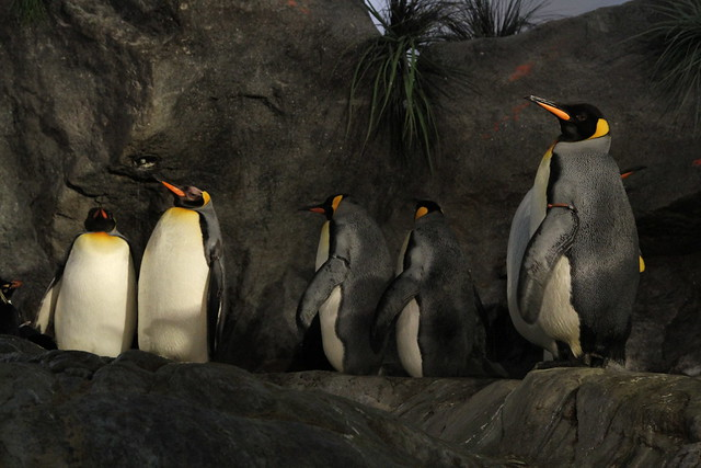 Great Zoo Exhibit: Penguin and Puffin Coast