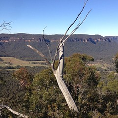 Fun dead tree. The view's not bad, either :) #nofilter #bluemountains