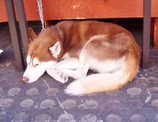 Sleeping dog-Kearny St.