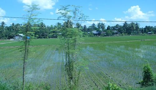 Makale-Makassar-Bus 3 (5)