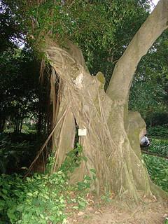 089 Kowloon Park