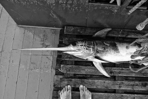 Il pesce spada e i piedi
