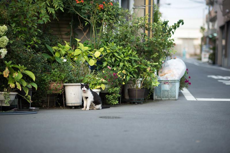 猫cat early morning