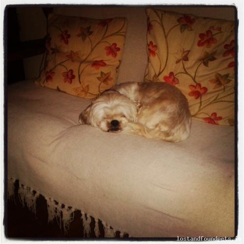 Fri, Sep 20th, 2013 Lost Female Dog - Corbally, Cummer, Claregalway