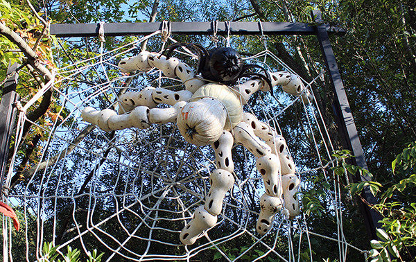Spider made from Pumpkins