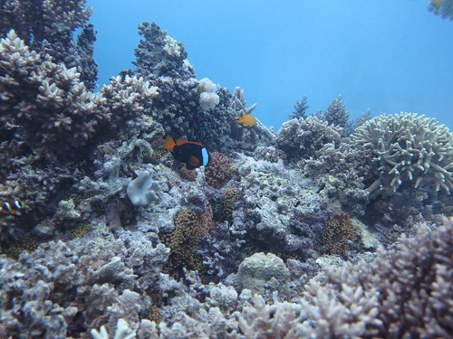 Great Barrier Reef7