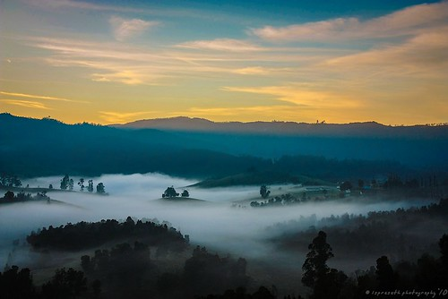 mountains tamilnadu kodaikanal munnar firstlight nilgiris travelphotography naturalscenery beautifuldawn blanketoffog paintedlandscape lsp10photography fogcoveredlandscape