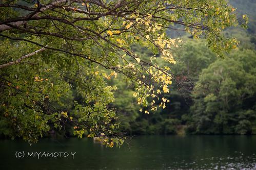 lake reflection tree japan sunrise woods nikko 2013