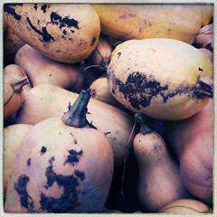 Ferme d'Orgères #fall #farming