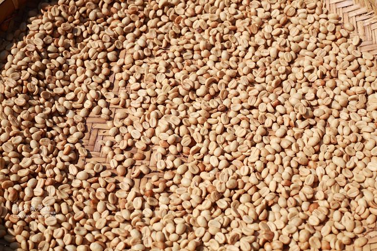 南化咖啡 山嵐意境の烏山咖啡 (14)