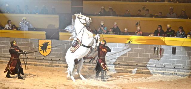 Medieval  Times Orlando Florida - more horse shows