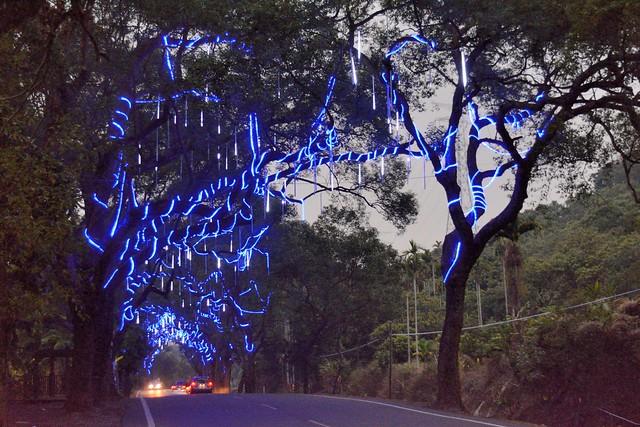 集集綠色隧道夜景