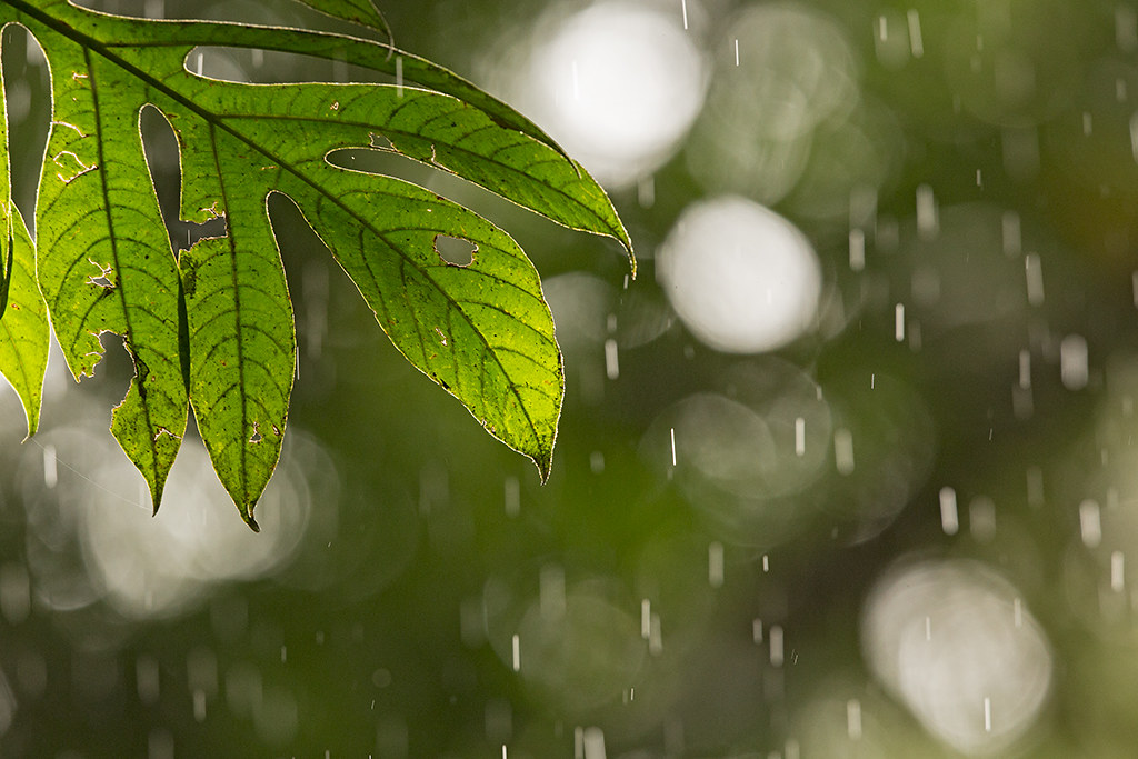 Rain Forest 2014-02-02