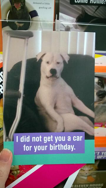 Hallmark Funny Pet Cards_10