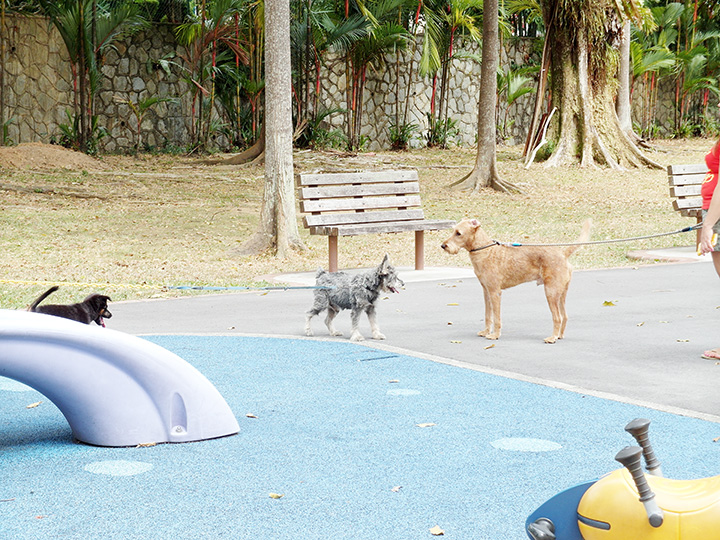 dogs at playground
