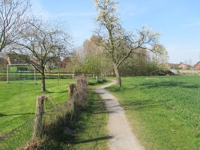 Kirchhellen-Grafenwald