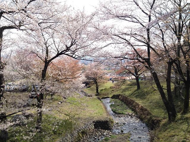 霞間ヶ渓 桜