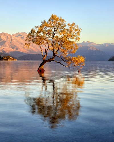 wanaka tree new zealand thatwanakatree newzealand lake roys bay water reflection sunrise first light dawn morning pacific island south lone willow