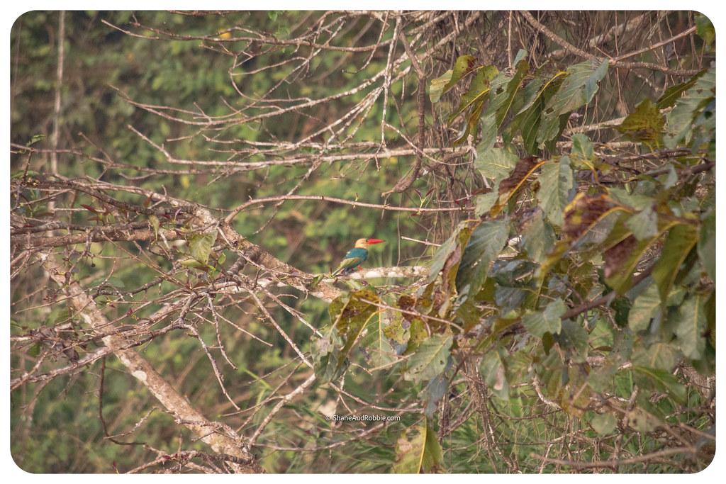 Borneo-20170411-IMG_7479