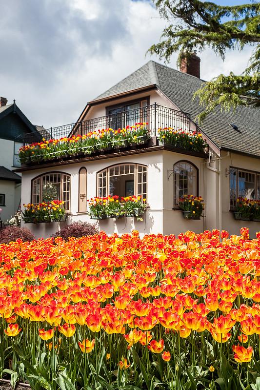 Beach dr. Tulip House (3)