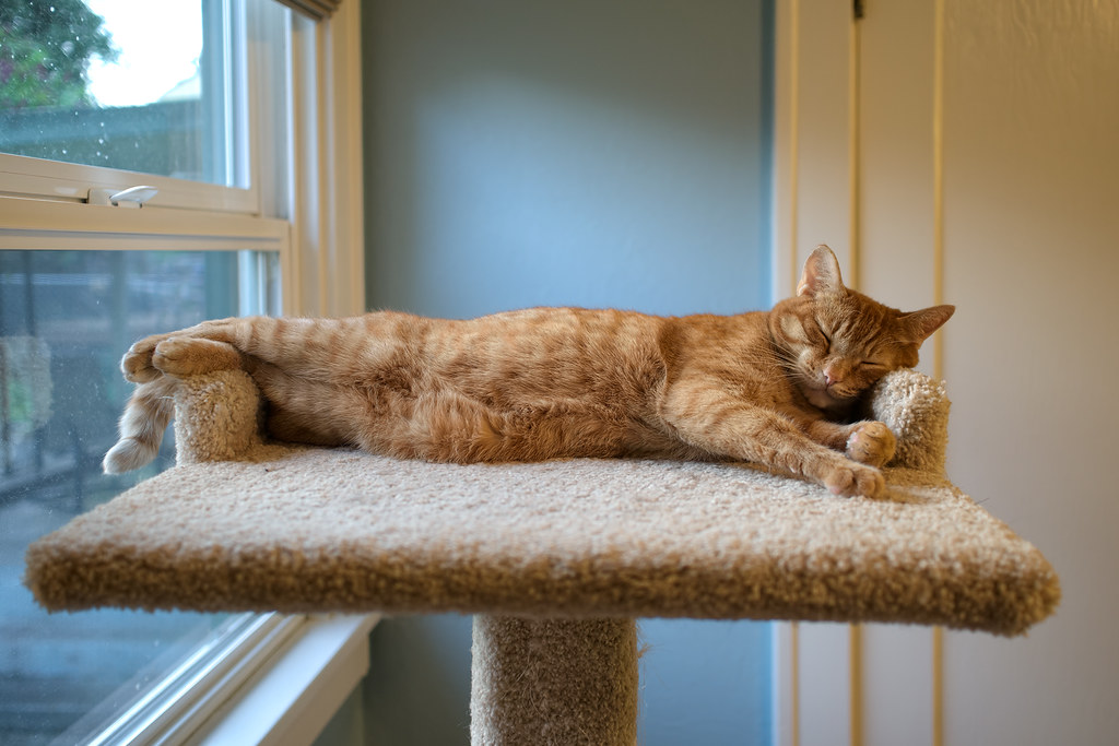 Our cat Sam stretches out on the cat tree