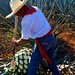 Jimador Harvesting Agave with a Coa por bbum