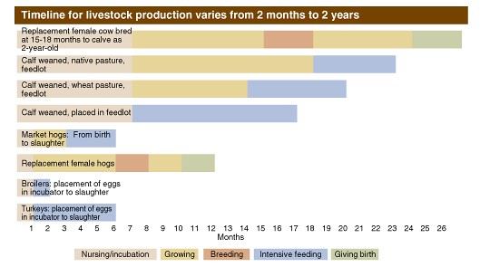 Livestock production timeline