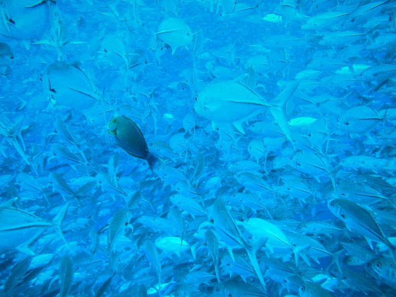 Sipadan diving review photos and video - Sipadan dive sites ...