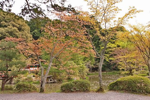 【写真】2013 桜 : 大原野神社/2021-01-15/IMGP0056