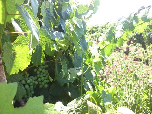 Harvest Moon @ Sonoma
