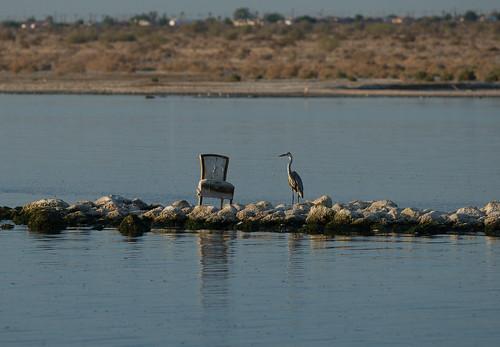 Salton Sea (CA)