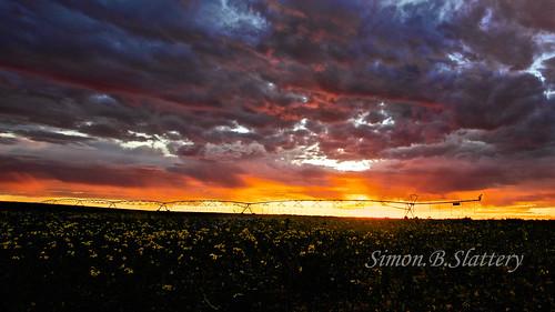 australia sa sunsetirrigation