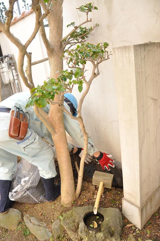庭木に肥料をやる時大切なことは枝のの方向2