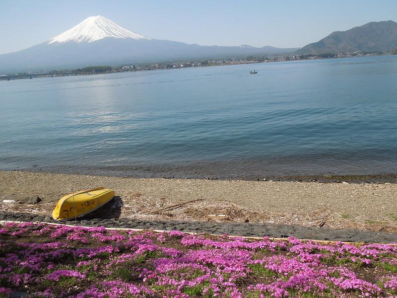 河口湖 富士山と桜 Lake Kawaguchiko – Mt. Fuji and cherry blossoms-0003