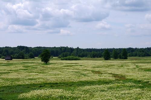 estonia pentax eesti k7 soomaa heinamaa viljandimaa soomaarahvuspark pentaxk7 kõpuvald tipuküla