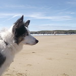 Dog Friendly Beach, Newgale, Pembrokeshire