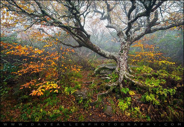 Craggy Gardens North Carolina Blue Ridge Parkway Nc Flickr Photo Sharing