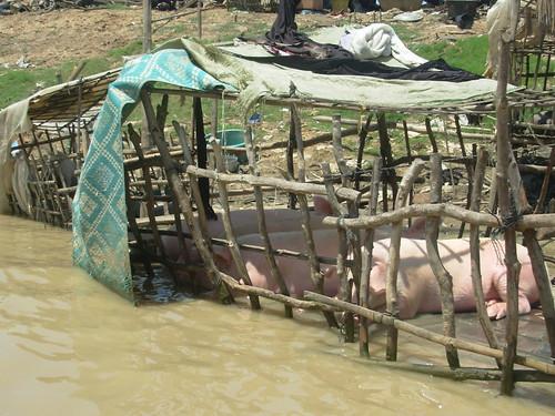Siem Reap-Battambang - bateau (40)