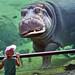 Hippo by Paco Herrero