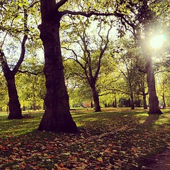 #autumn #park #trees #london #greenpark #mayfair