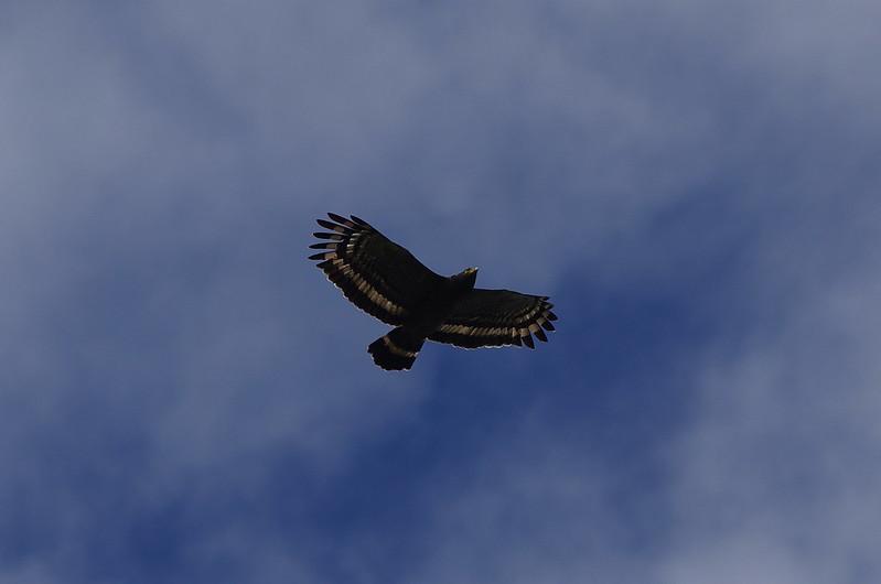 DA340 奮起湖拍鳥行