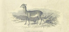 """British Library digitised image from page 13 of """"Explorations and adventures in Equatorial Africa; with accounts of the manners and customs of the people and of the chace of the gorilla, crocodile, leopard, elephant, hippopotamus and other animals. (Secon"""