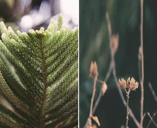 big sur plants