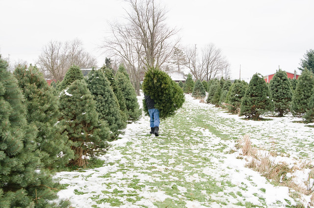 20131201-Cutting-a-Christmas-Tree-2125