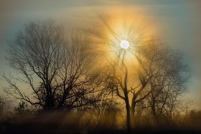 Fog, Mist, Foggy, Misty, Trees, Cold, Winter, Sun, Sunrise, Sky, Sunbeams