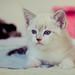 Adopt a kitten! by fofurasfelinas