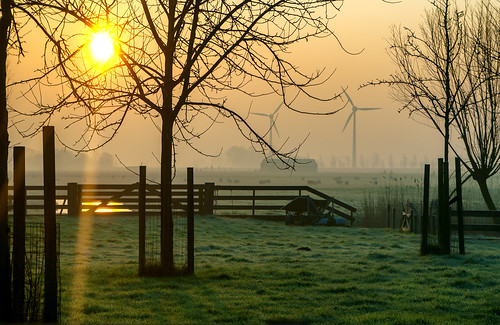 morning trees light sunset reflection green windmill misty fence landscape nikon frost sheep nederland nl noordholland obdam