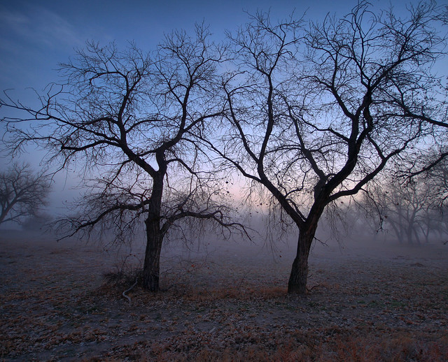 PT Photo - Trees in the fog-Challenge image