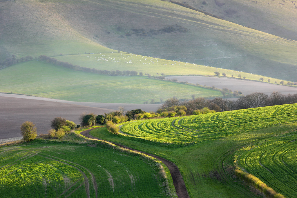 Kingston Ridge, South Downs
